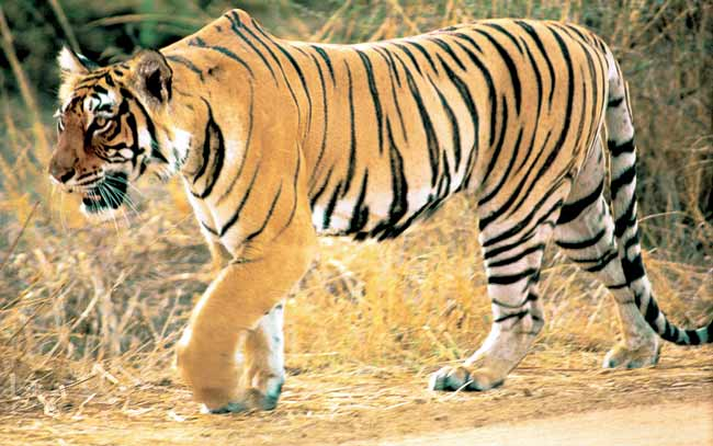 Nature's Wonder Tours, Ranthambhore