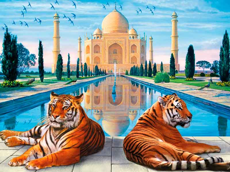 Wildlife of India And Taj