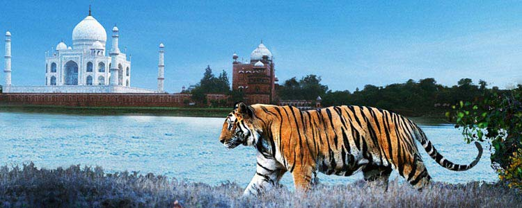 Wildlife of India And Taj trip